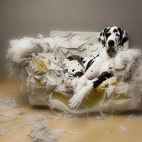 probleme comportement chien