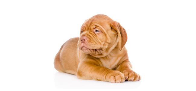 Formation chien catégorisé