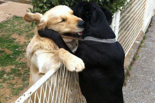 empatie ente chiens